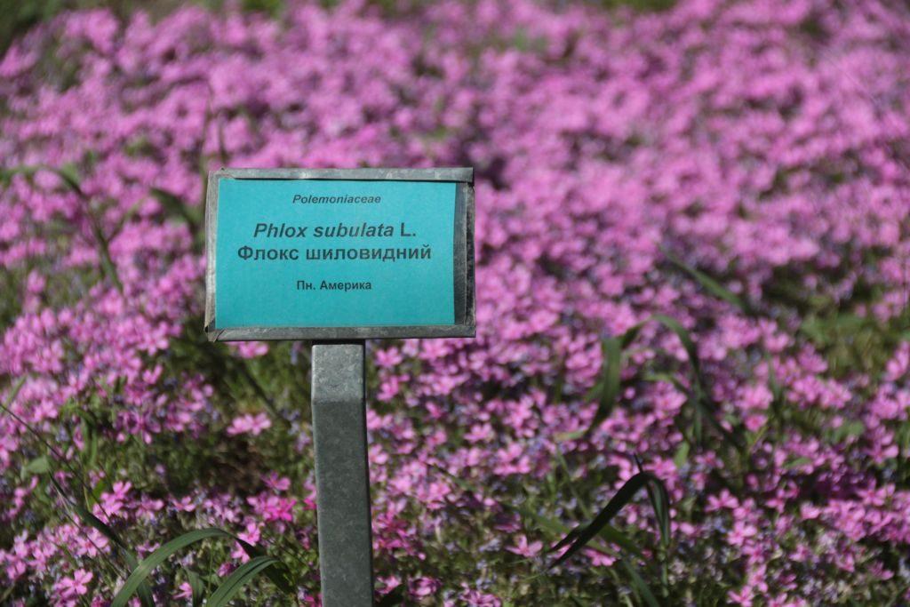 Ботанічний сад у Львові