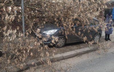 У Львові на автівку впало дерево. Фото: Варта1.