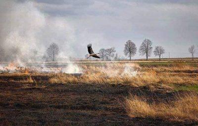 Наслідки випалювання сухої трави. Фото: Яворівська РДА