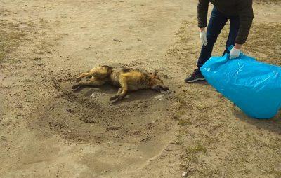 У Жовкві в страшних муках загинула собака. Фото: Ігор Муравський.