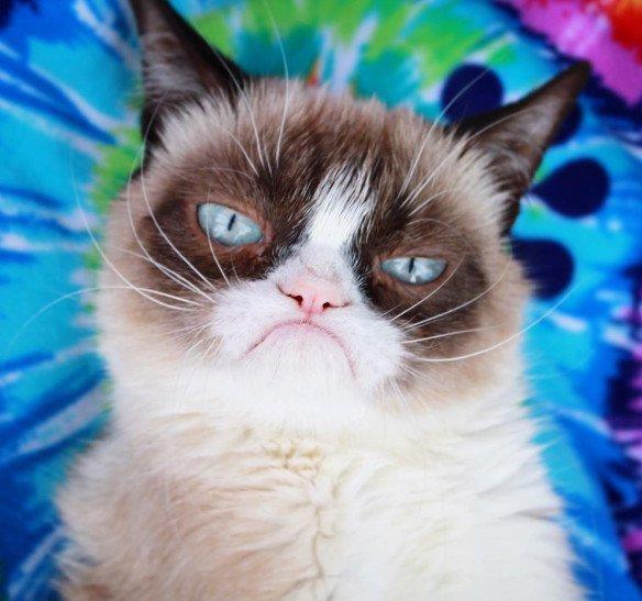 Grumpy Cat: померла найбільш сердита кішка у світі. Фото: Прямий.