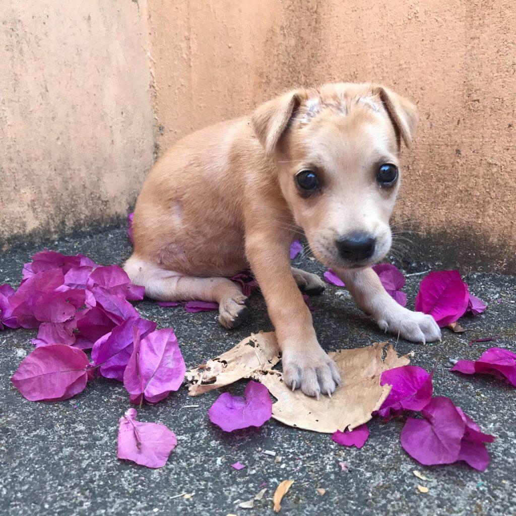 У Львові намагаються отруїти собак. Фото: відкриті джерела.