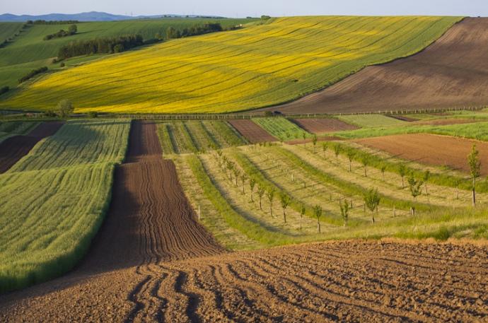 На Львівщині викрили посадовців сільрад, які займалися незаконним  відчуженням земельних ділянок - Четверта студія