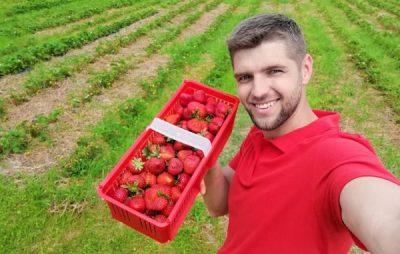 Синютка закликав замовити полуницю у фермера-атовця. Фото: відкриті джерела.