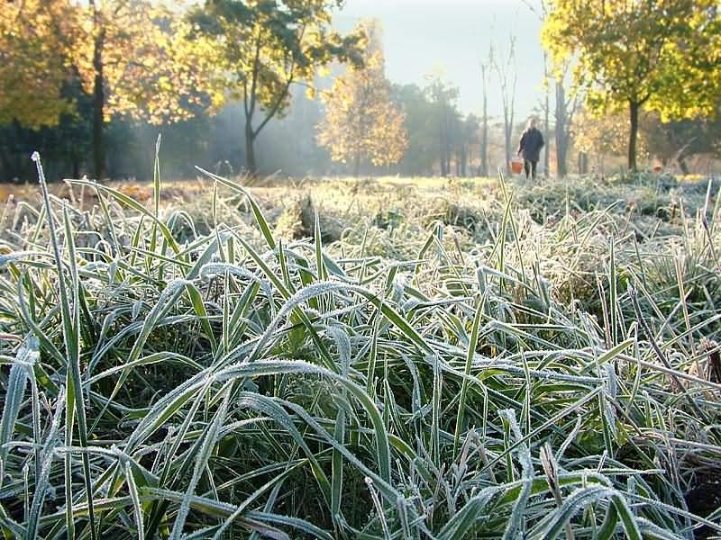 ДСНС повідомляє про заморозки в Україні. Фото: відкриті джерела.