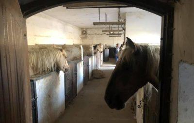 Москаленко поїхав подивитись на коней