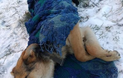 У Львові просять допомогти собаці, яку збила машина. Фото: Марта Борсук.