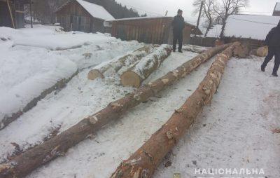 На Львівщині незаконно вирубують ліс. Фото: ГУ НП.