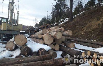 На Львівщині виявили 70 незаконно зрубаних смерек.