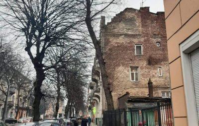 У Львові дерево може травувати людей. Фото: Уляна Балагурак.