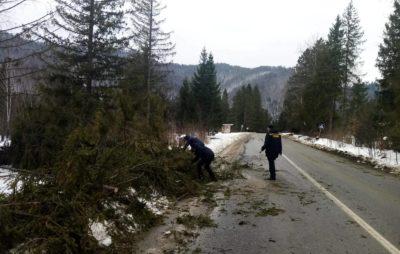 На Сколівщині сильний вітер повалив дерева. Фото: ДСНС.