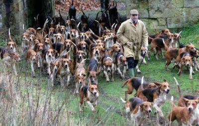 У Нафтогазі запевнили, що не потрібно продавати собак та котів. Фото: відкриті джерела.