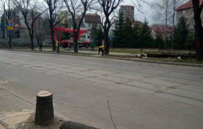 Як у Львові знищують дерева. Фото: Павло Яремко.