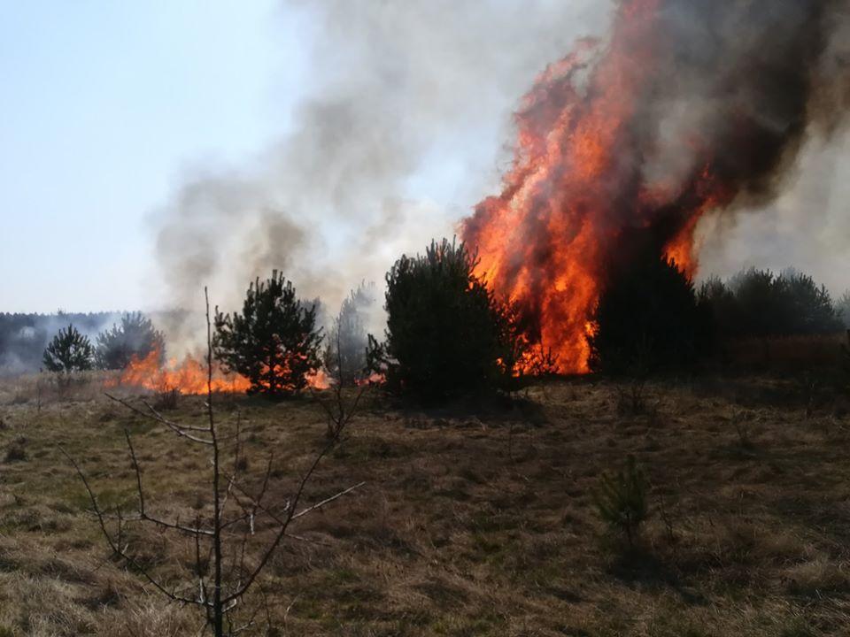 Як на Яворівщині сильна пожежа охопила ліс