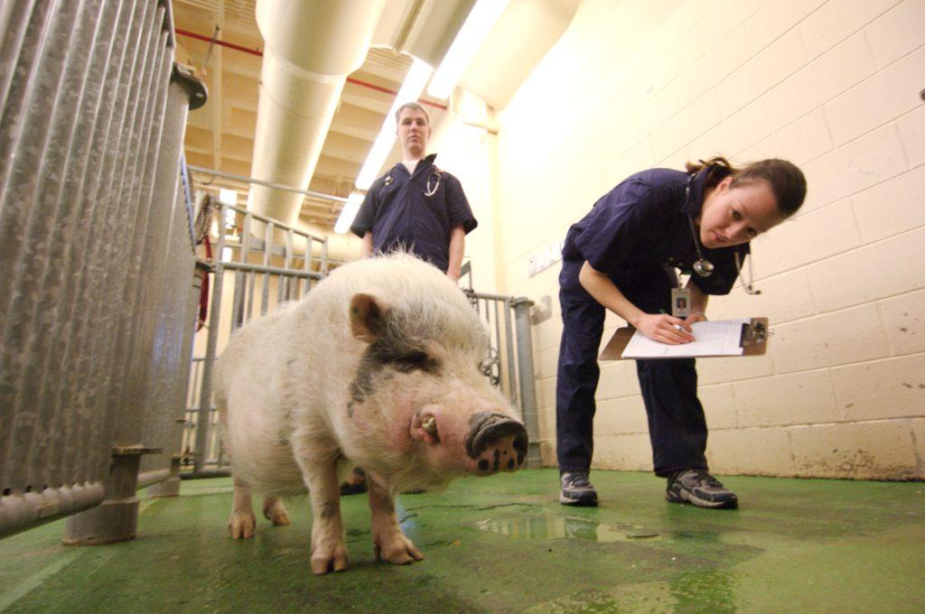 Ветклінікам та зооаптекам дозволили працювати під час карантину. Фото: відкриті джерела.