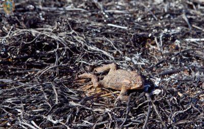 На Львівщині продовжують спалювати суху траву. Фото: ЛОДА.