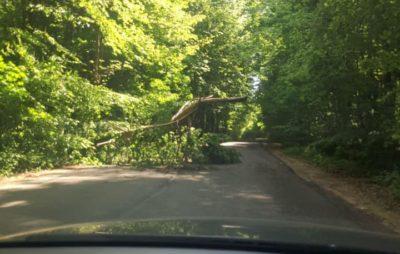 У Львові дерево заблокувало дорогу на цвинтар. Фото: Ігор Зінкевич.