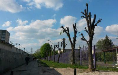 У Львові знищили дерева. Фото: Anett Evan.