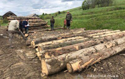 У Сколівському районі незаконно зрубали понад 100 смерек