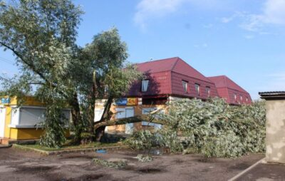 Фото: повалене дерево (gorohiv rayon in ua)