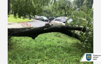 У Львові на літню жінку впало дерева. Фото: ЛМР.
