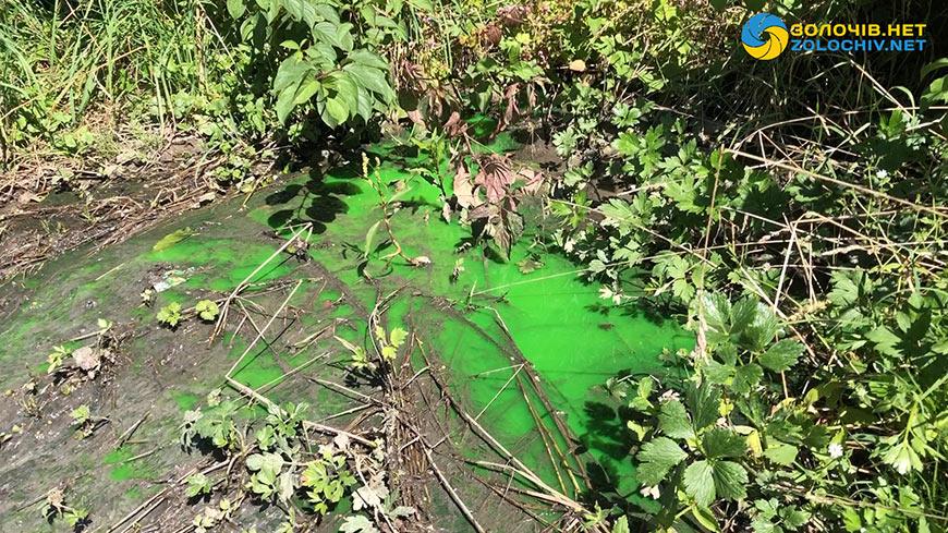 У Золочеві в парку біля Молодіжного озера тече зелена рідина. Фото: Золочів нет.