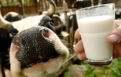 В Україні зменшилося виробництво молока. Фото: відккриті джерела.