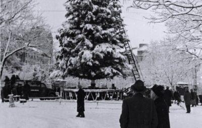 У Львові прикрашають головну ялинку міста, грудень 1960 року. Світлив Юліан Дорош