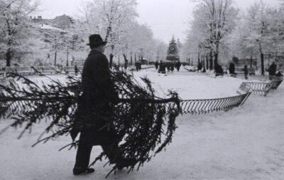 Чоловік несе ялину додому у Львові в грудні 1960 року. Світлив Юліан Дорош