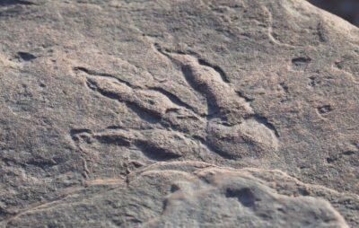 Слід динозавра, виявлений на пляжі Бендрікс-Бей, Велика Британія Фото: Музей Уельсу