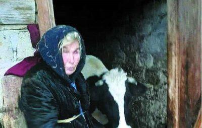 Заслужена доярка з Львівщини померла біля худоби у хліві. Фото: ВЗ