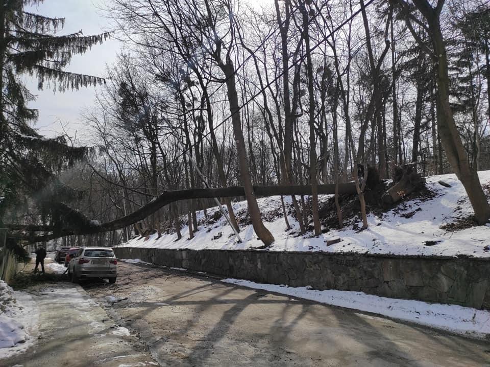 У Львові дерево пошкодило паркан приватного будинку (ФОТО)