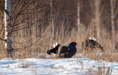 У Яворівському національному парку збереглись рідкісні види птахів. Фото: ЯПП