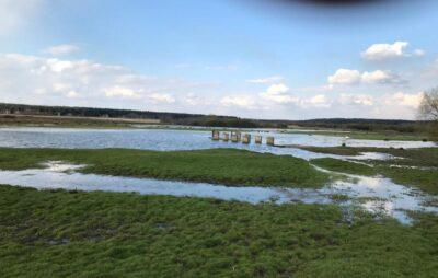 У Яворівському районі річка затопила пасовище. Фото: Сергій Задорожний