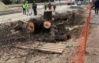 У Львові на вулиці Степана Бандери зрізали здорові дерева. Фото: Victor Mukan