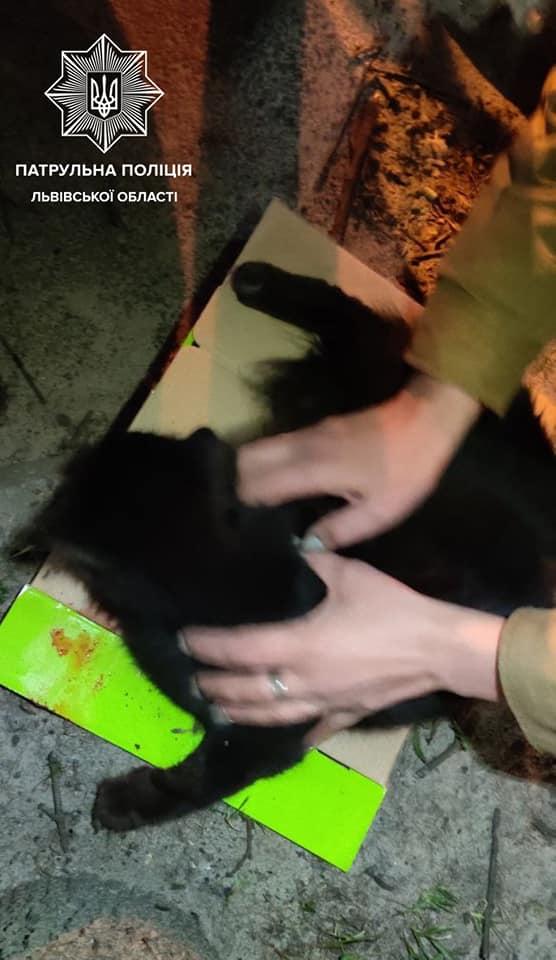 У Львові чоловік викинув з балкону кошенят. Фото: Патрульна поліція Львівської області