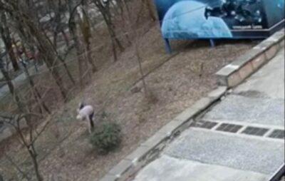 У Львові жінка вкрала з території парку посаджені рослини