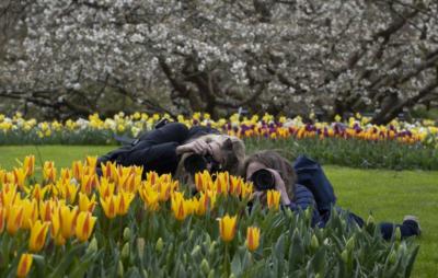 """У нідерландському парку """"Кекенгоф"""" розквітли поля тюльпанів"""
