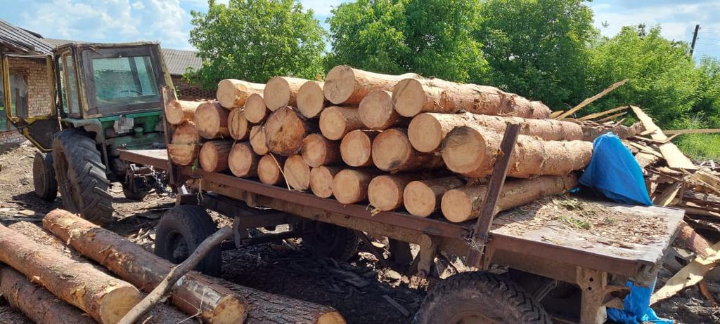 На Львівщині незаконно вирубують дерева. Фото: Поліція Львівської області