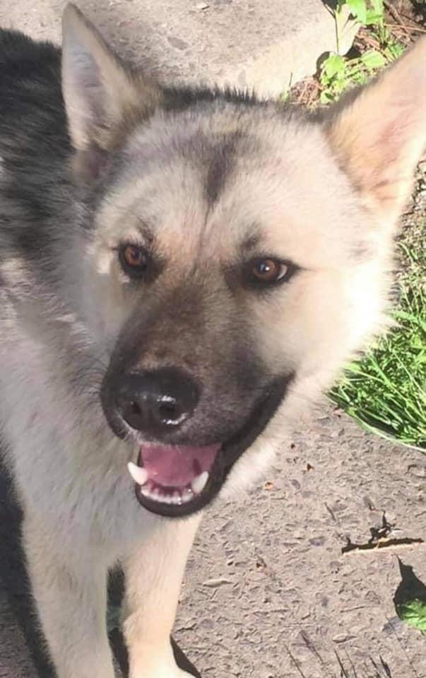 У Моршині отруїли собаку. Фото: Оля Клмнопр