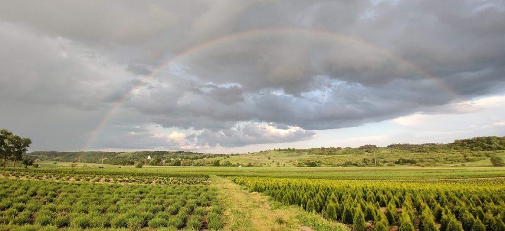 На полях вирощують 40 видів рослин. Фото: zaxid.net