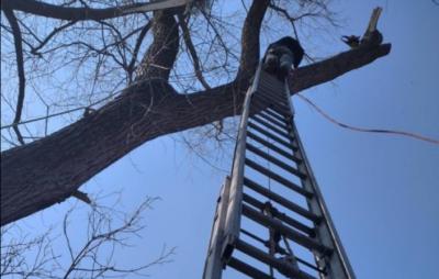 У Львівській області рятувальники зняли з дерева 8-річного хлопчика. Фото з відкритих джерел