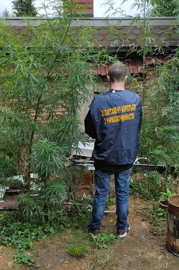 На Львівщині 45-річний чоловік вирощував канабіс. Фото: Поліція Львівської області