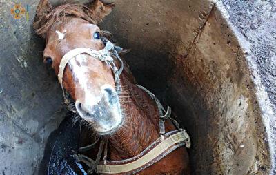 На Львівщині рятувальники витягнули коня з каналізаційної ями