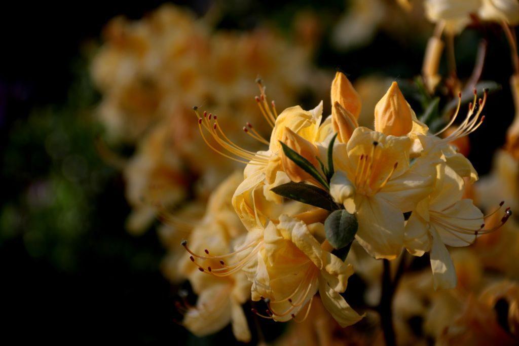Квіти у ботанічному саду, Львів