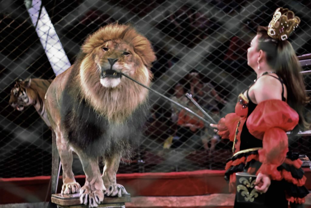 цирк з тваринами. Фото Цензор.НЕТ
