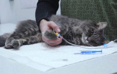 Юнакам, які намагались вбити кота, загрожує до 3 років обмеження волі. Фото ілюстроване з відкритих джерел.