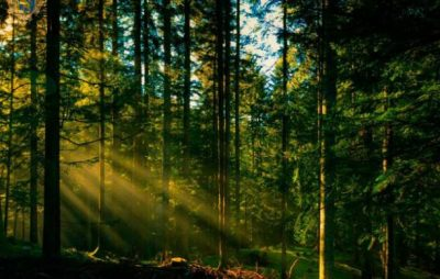 На Львівщині триває робота із посилення охорони лісів. Фото: прес-служба ЛОДА.