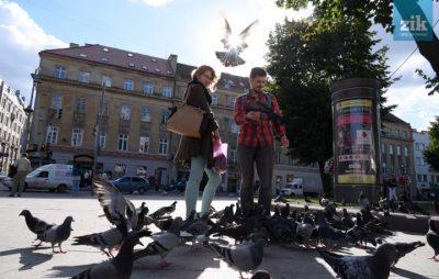 Як у Львівській мерії рахували голубів. Фото: ZIK