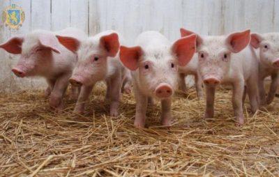 Аграрії Львівщини лідирують за виробництвом сільськогосподарської продукції